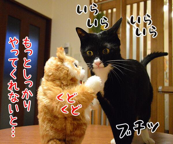 猫田係長 猫の写真で4コマ漫画 3コマ目ッ
