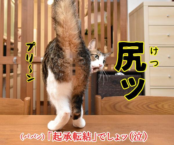 4コマまんがの基本といえば? 猫の写真で4コマ漫画 4コマ目ッ