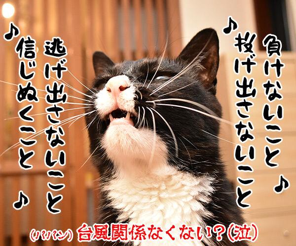 台風接近時にしてはいけないこと 猫の写真で4コマ漫画 4コマ目ッ