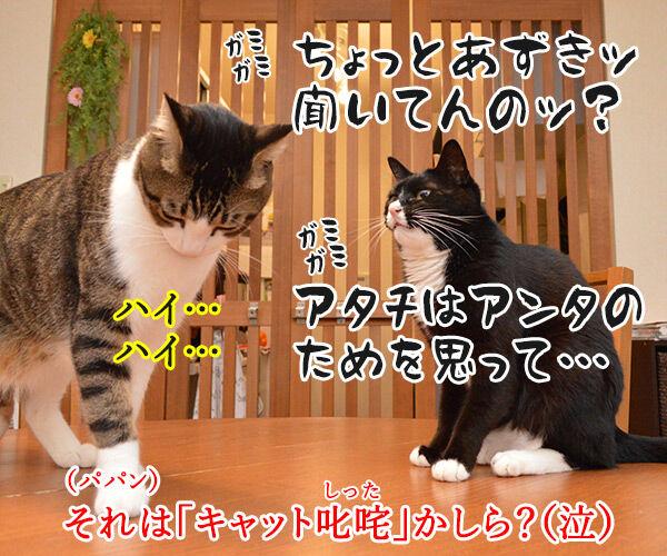 ペットシッターを頼もうかしら? 猫の写真で4コマ漫画 4コマ目ッ