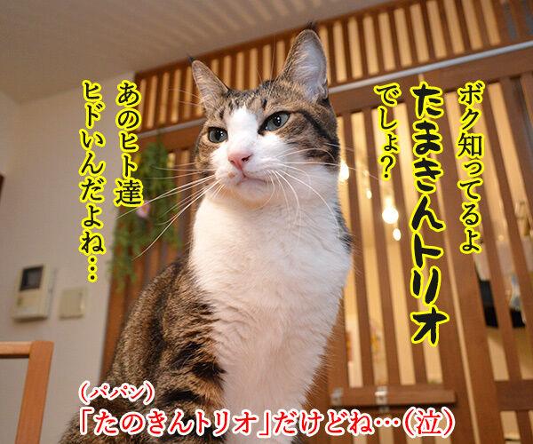 アタチがジャニーズで一番なのは…? 猫の写真で4コマ漫画 3コマ目ッ