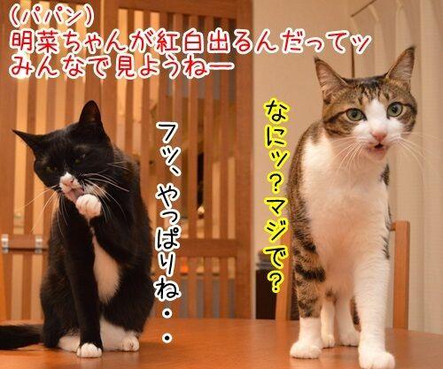 中森明菜さん紅白出場 猫の写真で4コマ漫画 1コマ目ッ