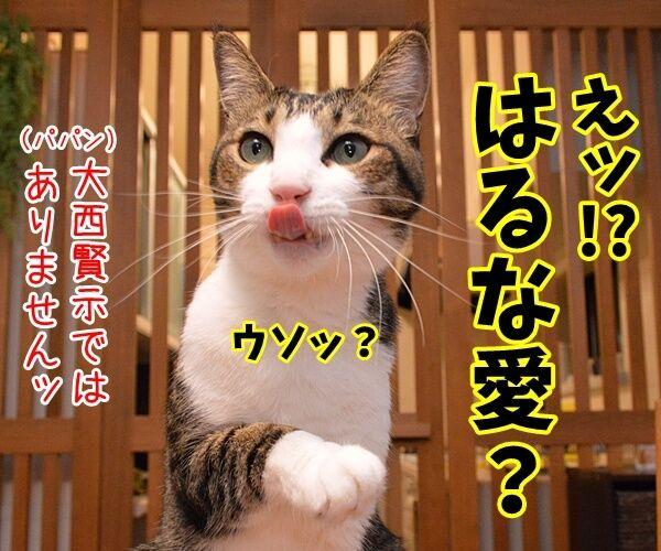 愛ちゃんが入籍してたんですってッ 猫の写真で4コマ漫画 2コマ目ッ