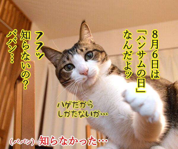 ボクがココで、パパンがココ 猫の写真で4コマ漫画 3コマ目ッ