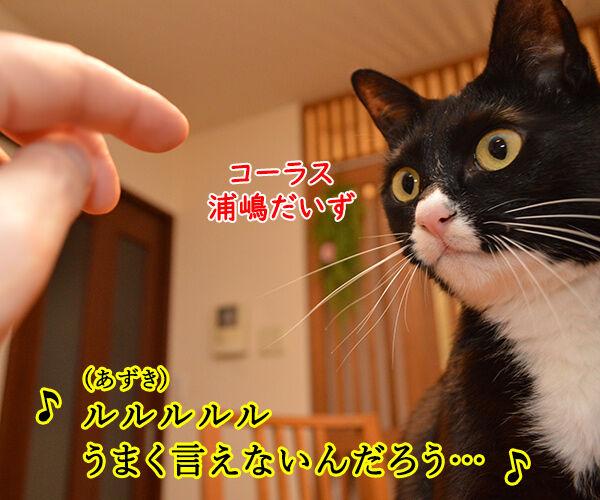 LOVE LOVE LOVE 猫の写真で4コマ漫画 2コマ目ッ