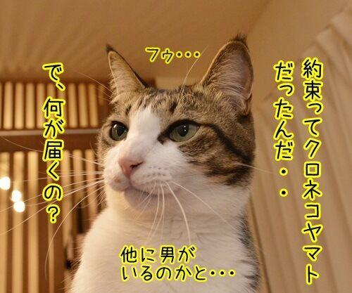 クロネコヤマトが来るから帰らなくちゃッ 猫の写真で4コマ漫画 2コマ目ッ