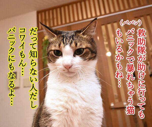 パニック状態のにゃんこにはアレを使うのよッ 猫の写真で4コマ漫画 2コマ目ッ