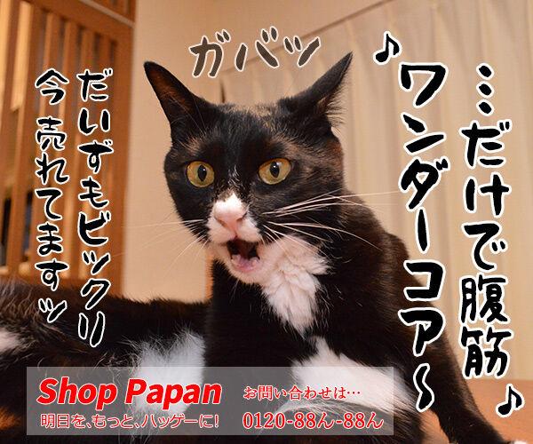 今、猫さんに売れてますッ!! 猫の写真で4コマ漫画 4コマ目ッ