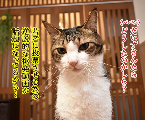 『若者よ、選挙に行くな』って動画があるんですってッ 猫の写真で4コマ漫画 2コマ目ッ