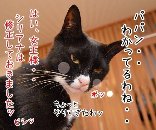 女王様の命令は絶対 猫の写真で4コマ漫画 4コマ目ッ