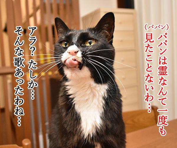 猫さんのシックスセンス 猫の写真で4コマ漫画 2コマ目ッ