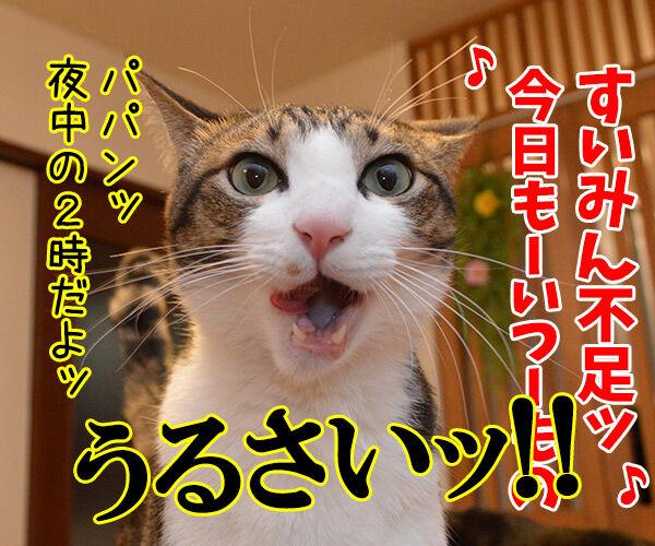 すいみん不足 猫の写真で4コマ漫画 4コマ目ッ