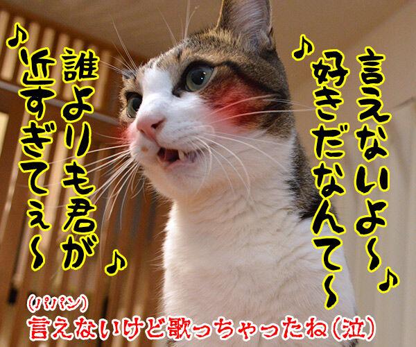 隠してなぁい? 猫の写真で4コマ漫画 4コマ目ッ