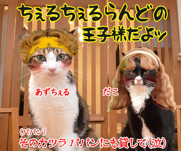 流し目王子に飽きちゃったから 猫の写真で4コマ漫画 4コマ目ッ