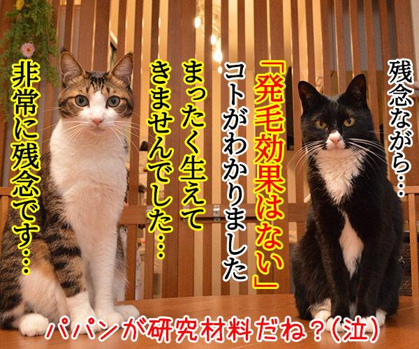 猫さんを撫でると「愛情ホルモン」が出るんですってッ 猫の写真で4コマ漫画 4コマ目ッ