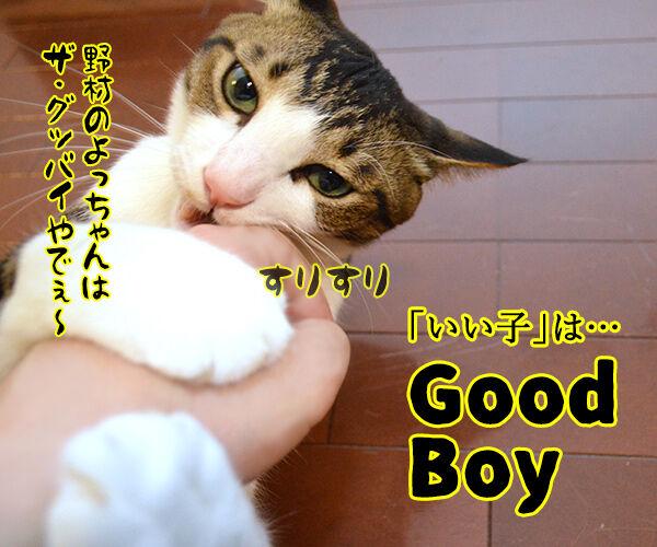 ドッグトレーナー 犬養あずきの英語でしつけるコマンド用語講座 猫の写真で4コマ漫画 3コマ目ッ