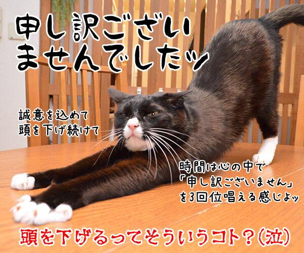 あずき先生のビジネスマナー講座「誠意が伝わる謝罪の仕方」 猫の写真で4コマ漫画 4コマ目ッ