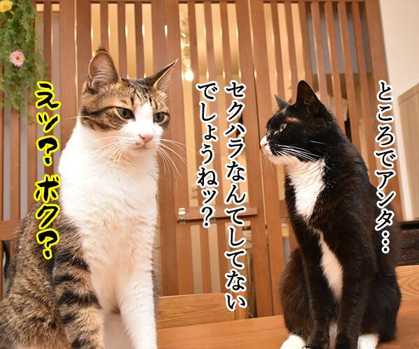 流行語大賞 ノミネート語 『#MeToo』 猫の写真で4コマ漫画 2コマ目ッ
