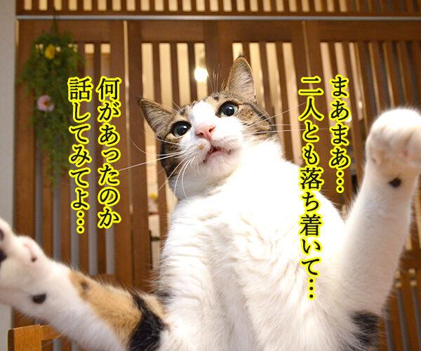 ケンカをやめて 猫の写真で4コマ漫画 2コマ目ッ
