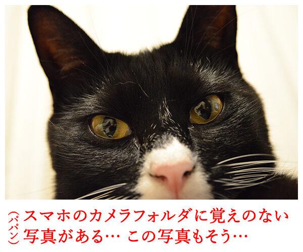 自撮り 猫の写真で4コマ漫画 1コマ目ッ