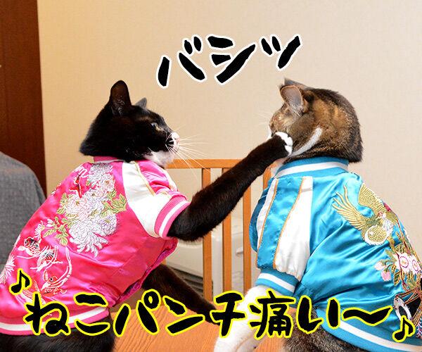 あずきとだいずのあたりまえ体操? 猫の写真で4コマ漫画 1コマ目ッ