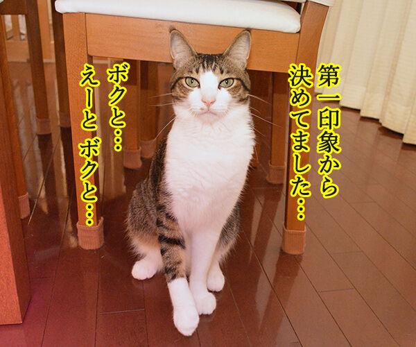 ねるとん 其の一 猫の写真で4コマ漫画 2コマ目ッ