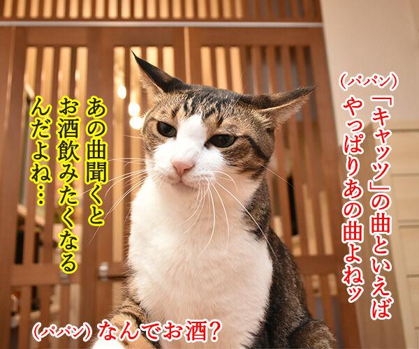 大ヒットミュージカル「キャッツ」が実写映画化なのよッ 猫の写真で4コマ漫画 3コマ目ッ