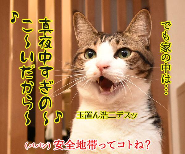 お外ってデンジャラスゾーンだよねッ 猫の写真で4コマ漫画 2コマ目ッ