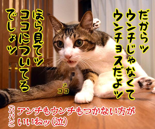 パパンのブログって… 猫の写真で4コマ漫画 4コマ目ッ