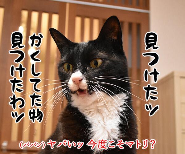 パパンちにマトリが家宅捜索なのッ 猫の写真で4コマ漫画 3コマ目ッ