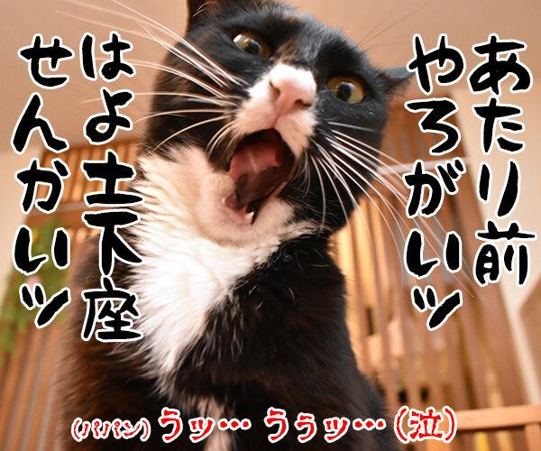 だいず女王様がお怒りですッ 猫の写真で4コマ漫画 2コマ目ッ