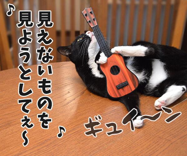 天体観測 猫の写真で4コマ漫画 3コマ目ッ