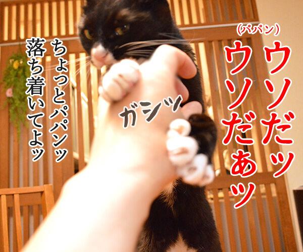 ウソだッ!!ウソだぁッ!! 猫の写真で4コマ漫画 1コマ目ッ