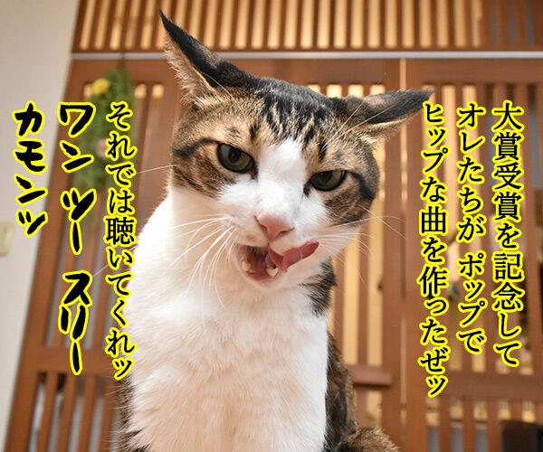 流行語大賞は「そだねー」に決まったのよッ 猫の写真で4コマ漫画 2コマ目ッ