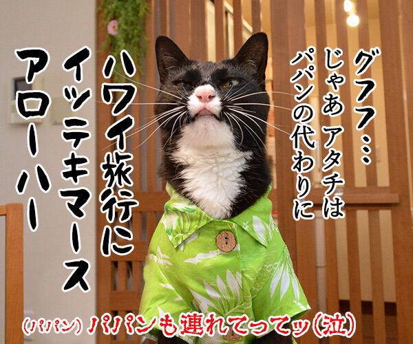 ゴールデンウィークはお仕事なの 猫の写真で4コマ漫画 4コマ目ッ