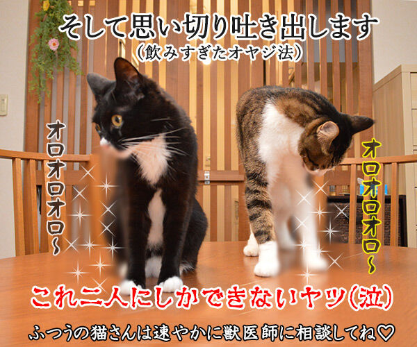 猫さんが誤飲してしまったら…? 猫の写真で4コマ漫画 4コマ目ッ