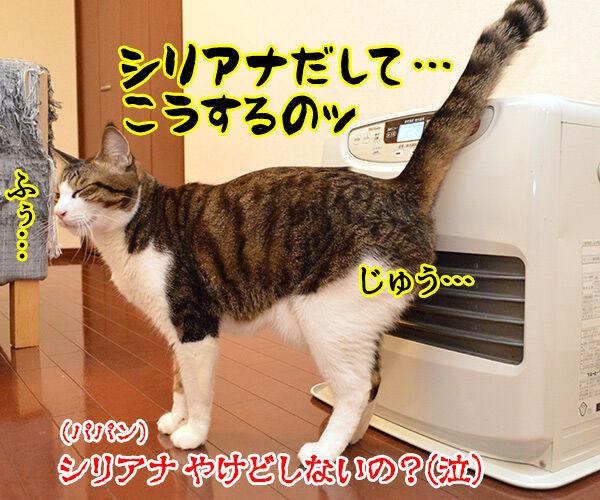 すぐあったかくなるヒーターのあたり方 猫の写真で4コマ漫画 4コマ目ッ