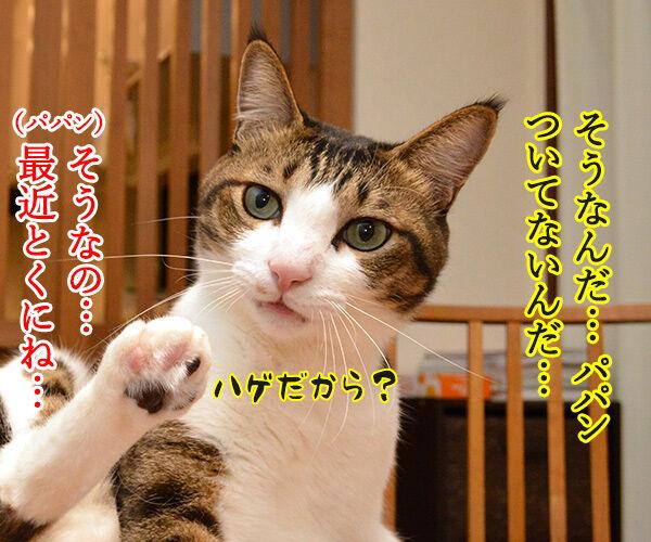 最近ついてないのよね… 猫の写真で4コマ漫画 2コマ目ッ