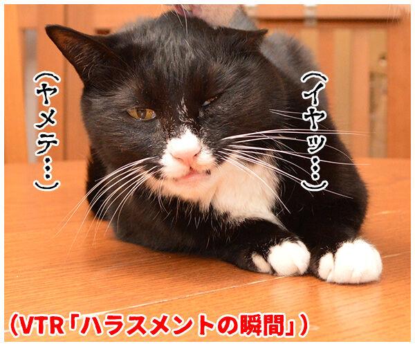 ハラスメントの定義を教えてください 猫の写真で4コマ漫画 2コマ目ッ