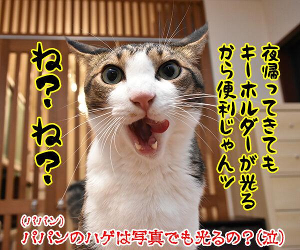 かわいいキーホルダーが欲しいのよッ 猫の写真で4コマ漫画 4コマ目ッ