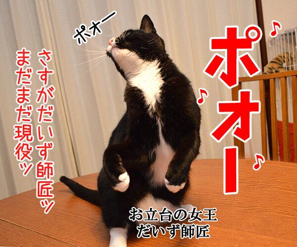 しりあな 猫の写真で4コマ漫画 4コマ目ッ
