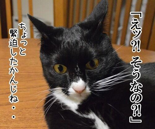 女優だいずの演技講座 猫の写真で4コマ漫画 2コマ目ッ