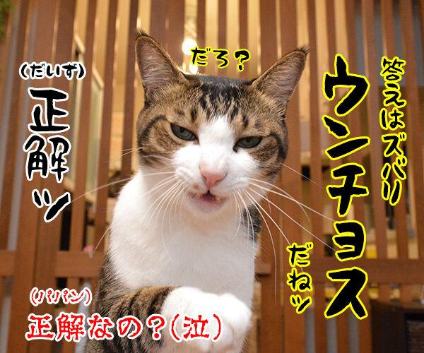 土用の丑の日でクイズなの 猫の写真で4コマ漫画 4コマ目ッ