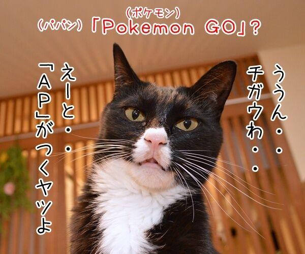 流行語大賞はどれになると思う? 猫の写真で4コマ漫画 2コマ目ッ