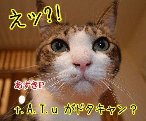 ドタキャン 猫の写真で4コマ漫画 1コマ目ッ