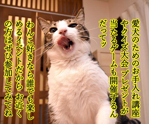 今週末はららぽーと豊洲のドッグイベントに行こうッ 猫の写真で4コマ漫画 2コマ目ッ