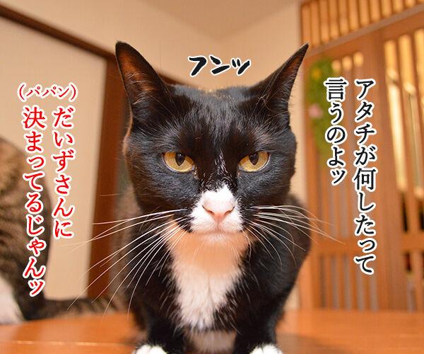 ケンカをやめて 猫の写真で4コマ漫画 1コマ目ッ