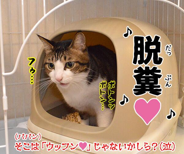 『うる星やつら』の高橋留美子先生が紫綬褒章だから唄うのよッ 猫の写真で4コマ漫画 4コマ目ッ