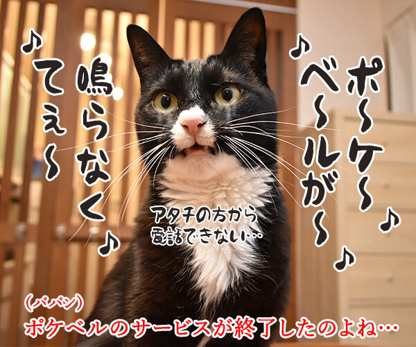 ポケベルが鳴らなくて ポケベルのサービスが終了しちゃったのよッ 猫の写真で4コマ漫画 1コマ目ッ