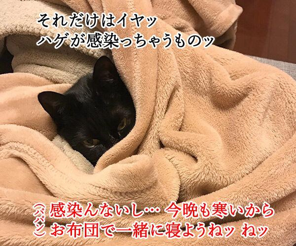 寒い夜はパパンのお布団で寝ませんこと? 猫の写真で4コマ漫画 3コマ目ッ